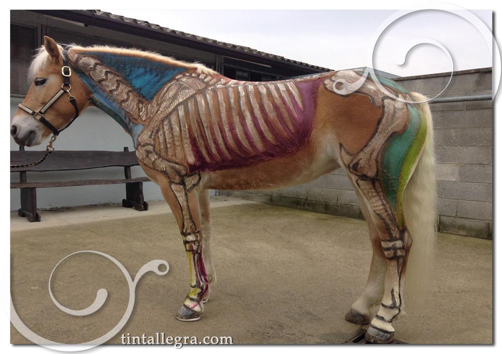 Ben noto cavalli-bianchi-e-colori | Tintallegra WN53