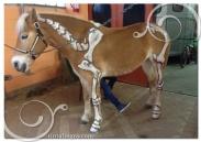 cavalli-elaborato