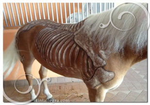 cavalli-scheletro